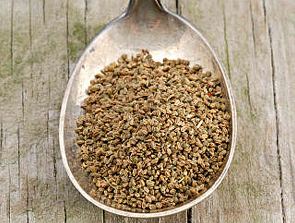 Celery Seed Health Benefits and Remedies