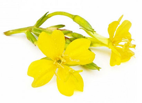 Evening Primrose Oil Health Benefits