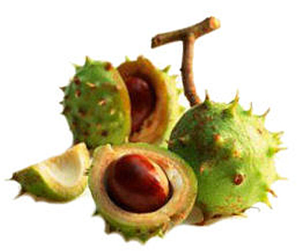 Health Benefits of Horse Chestnut